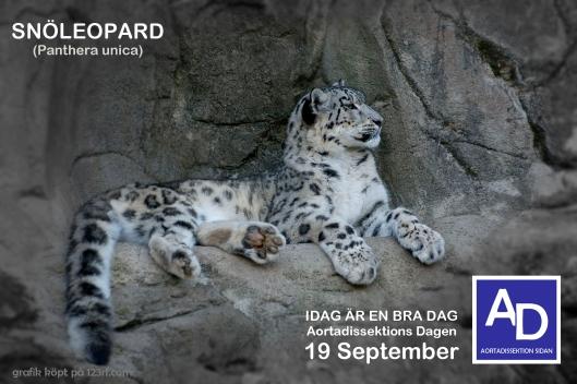 snöleopard bra dag ny blå